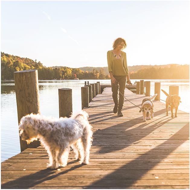 woman walking dogs on muskoka dock near hewitt's gate barrie